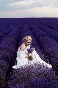 ''Bùa yêu'' mang tên nàng hoa Lavender Pháp
