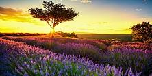 Vòng Quanh Châu Âu : Pháp - Monaco - Ý - San Marino - Vatican Mùa Hoa Lavender