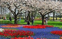 Keukenhof - Hà Lan