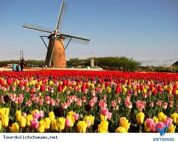Lễ Hội Hoa Tuylip Tại Hà Lan,Le Hoi Hoa Tuylip Tai Ha Lan